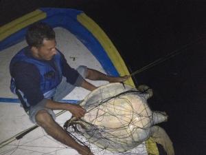 Alejandro Juvenile rescue